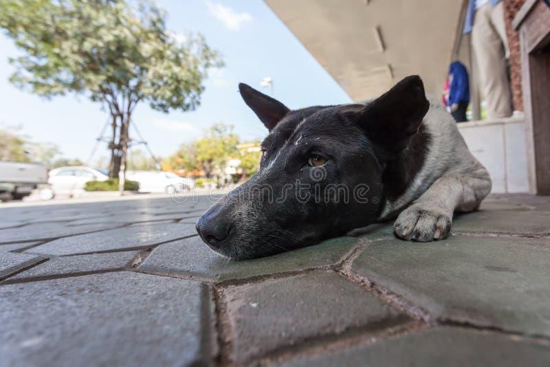 Stretdog fotos de archivo