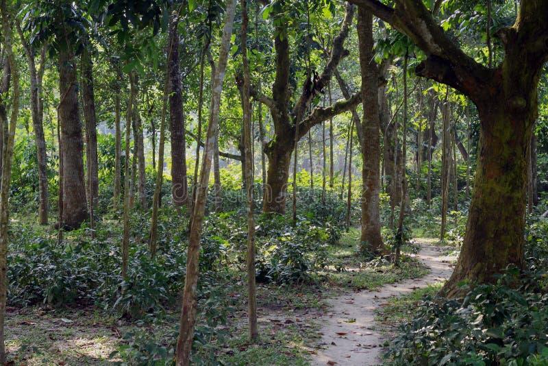 Stretto della foresta del villaggio alla strada funzionante fotografia stock libera da diritti