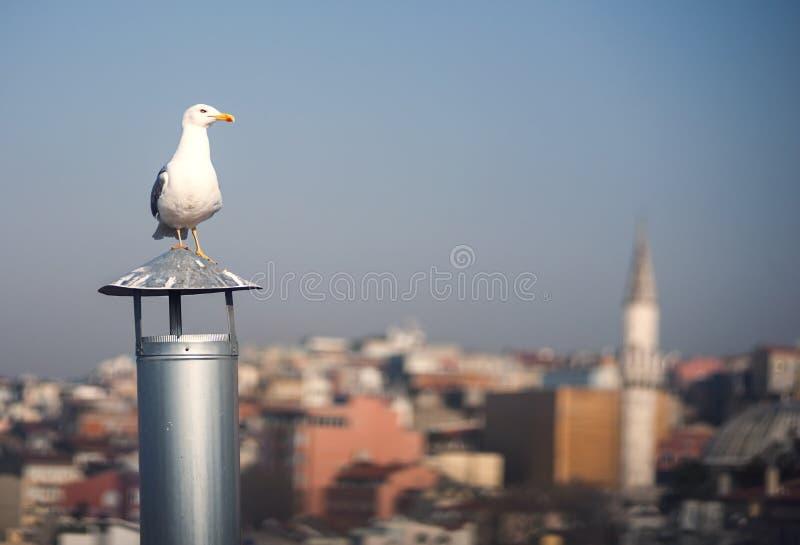 Stretto di Bosphorus dal tetto superiore fotografia stock libera da diritti