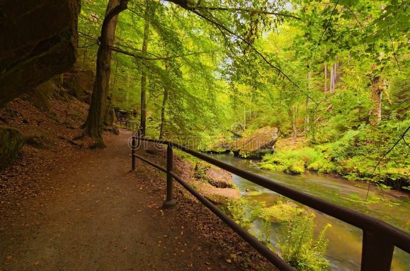 Stretto e fiume scorrente vicino di Kamenice della traccia di escursione di bobina nel parco nazionale della Boemia della Svizzer immagini stock