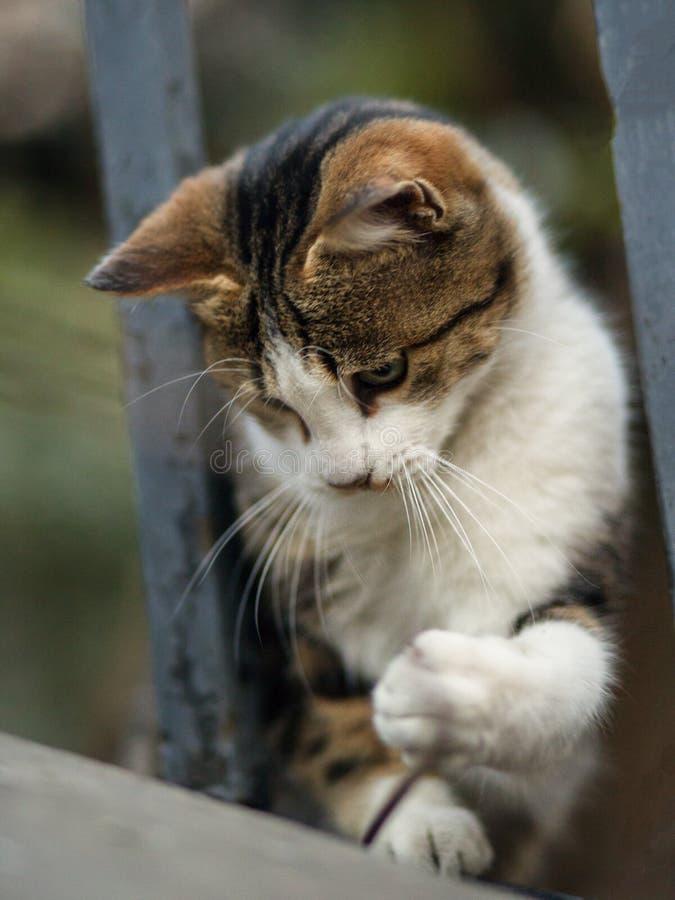 2019 Streu-Cat Photographer neues Foto, nette Katze stockbild