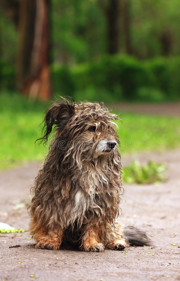 Streuhund stockbild