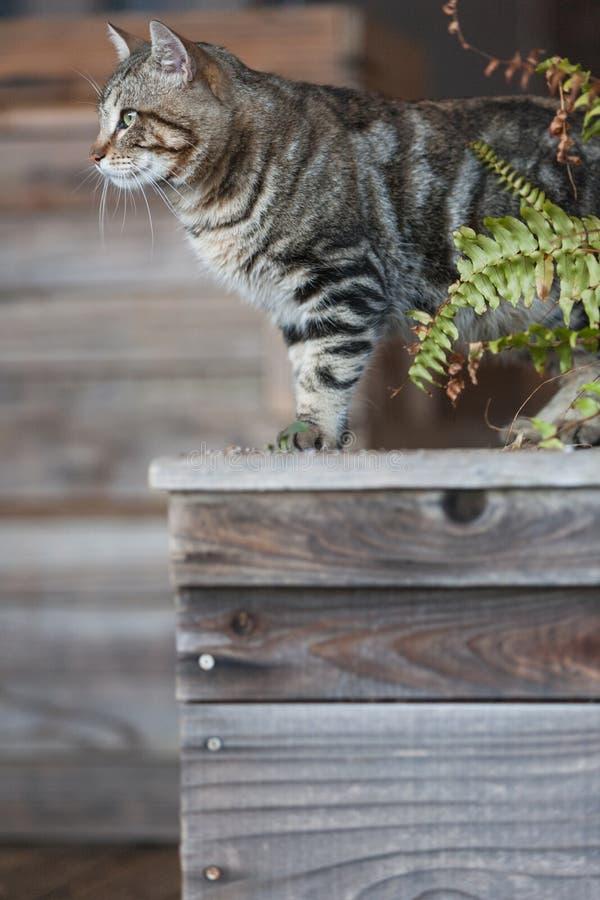 Streukatze auf hölzernem Pflanzer lizenzfreie stockfotos