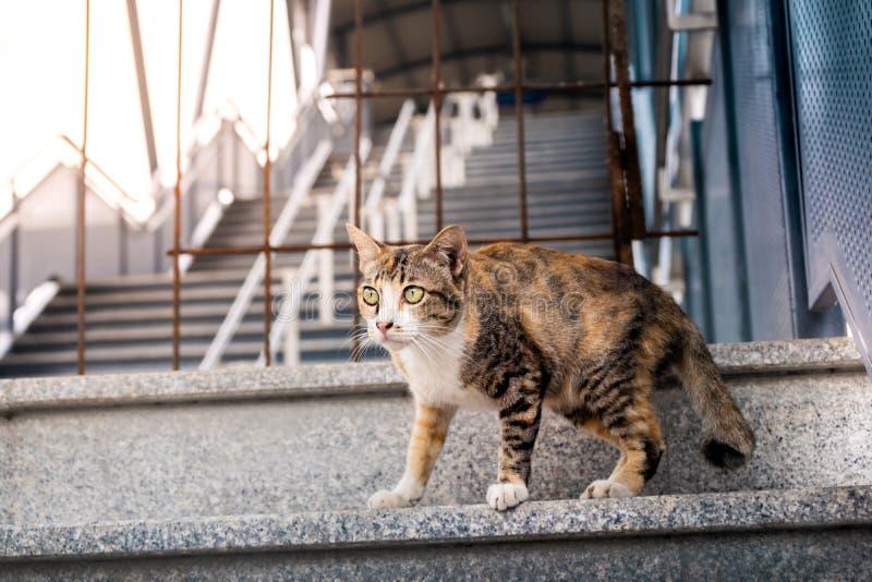 Streukatze im st?dtischen Brown streifte Katze lizenzfreie stockbilder