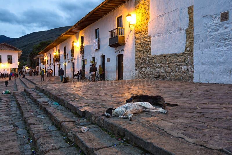 Streunende Hunde in Villa de Leyva Kolumbien stockfoto