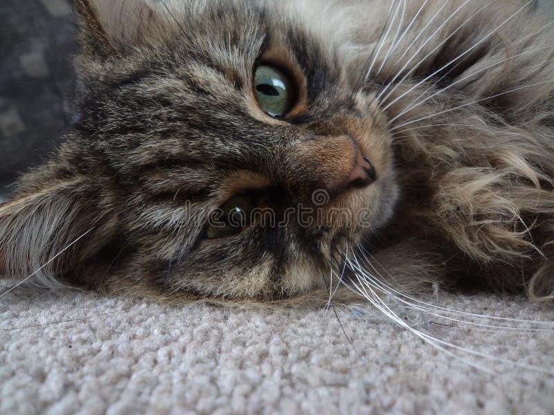 Streunende Katze lizenzfreies stockfoto