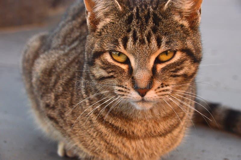 Streunende Katze mit gelben Augen stockfoto