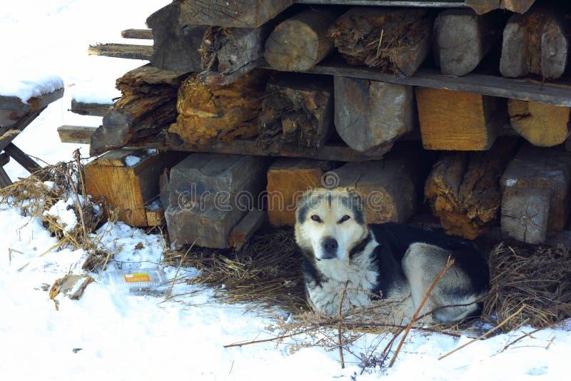 Streunender Hund auf den Ruinen des Hauses lizenzfreie stockbilder