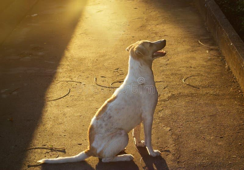 Streunender Hund auf Straße im vibrierenden Licht lizenzfreies stockbild