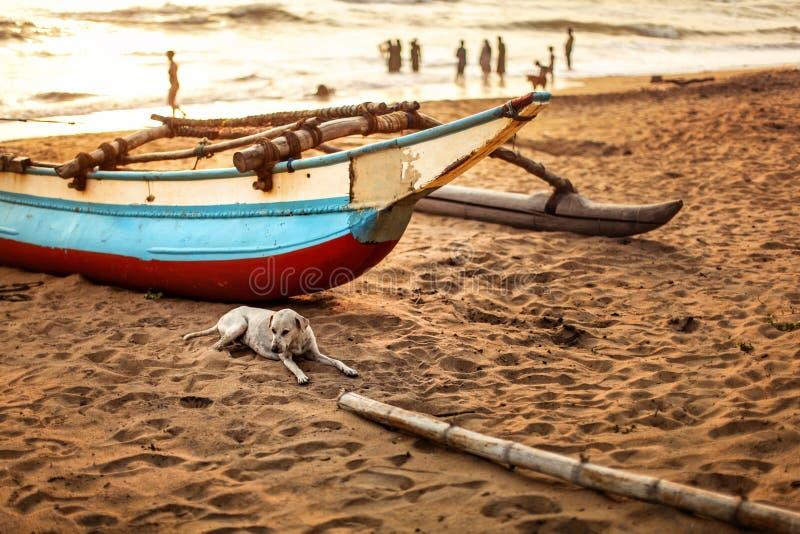 Streunender Hund, der auf den Strandsand, vor Fischerboot legt stockbild