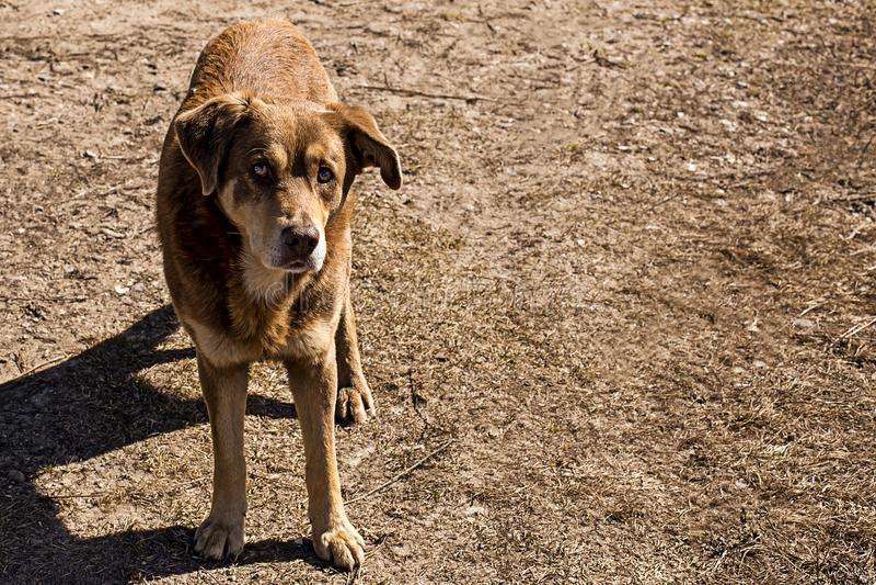 Streunender Hund in der Natur, kümmern sich um Tieren lizenzfreies stockbild