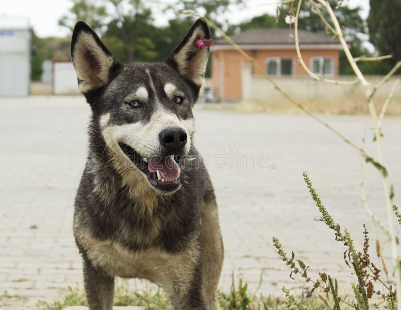 Streunender Hund im Tierheimpark lizenzfreie stockbilder