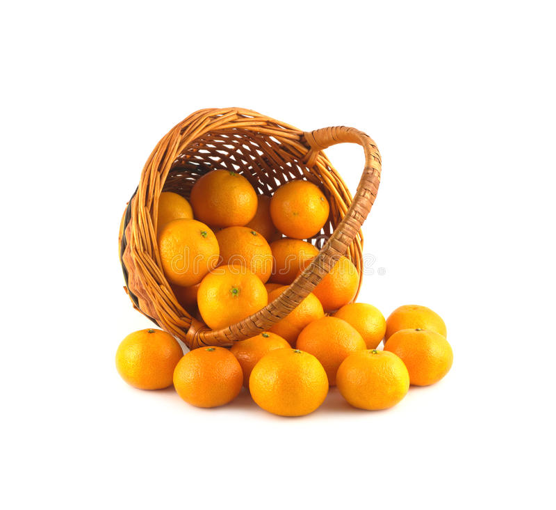 Strewed tangerines from wicker basket lays isolated. Strewed tangerines and inverted wicker basket isolated on white background close up stock photos