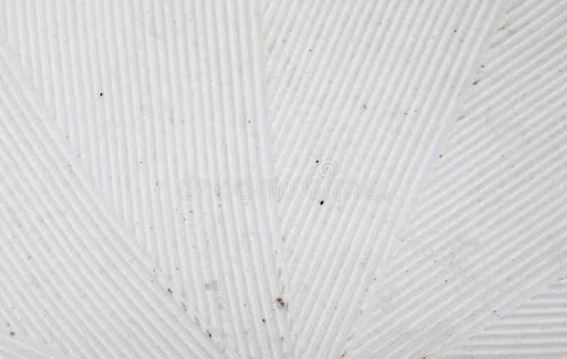 Stria listrado delicado da textura no branco Close-up do japonês de Suribachi e de Surikogi imagens de stock