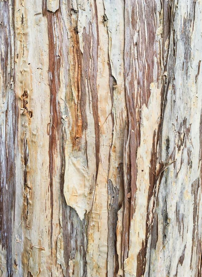 Striated шелушась картина коры стоковая фотография