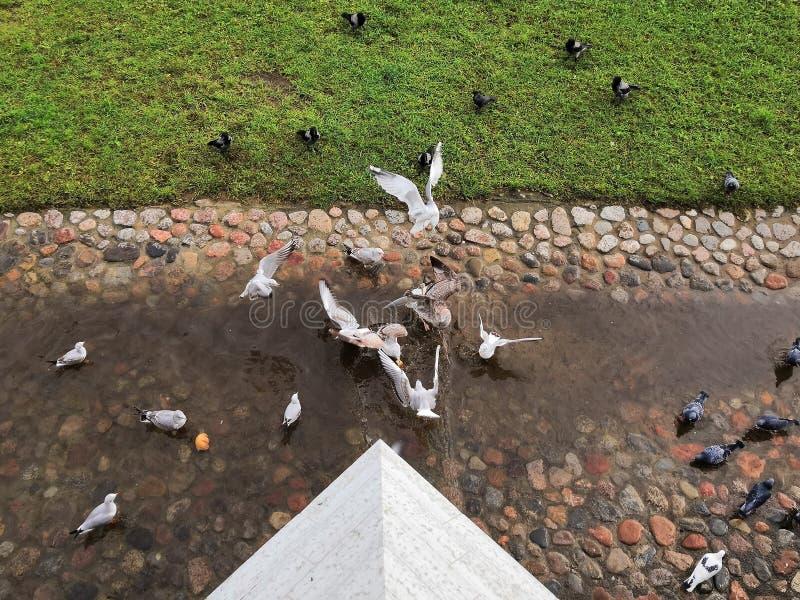 Striden för bröd duvaseagullsbröd arkivfoto