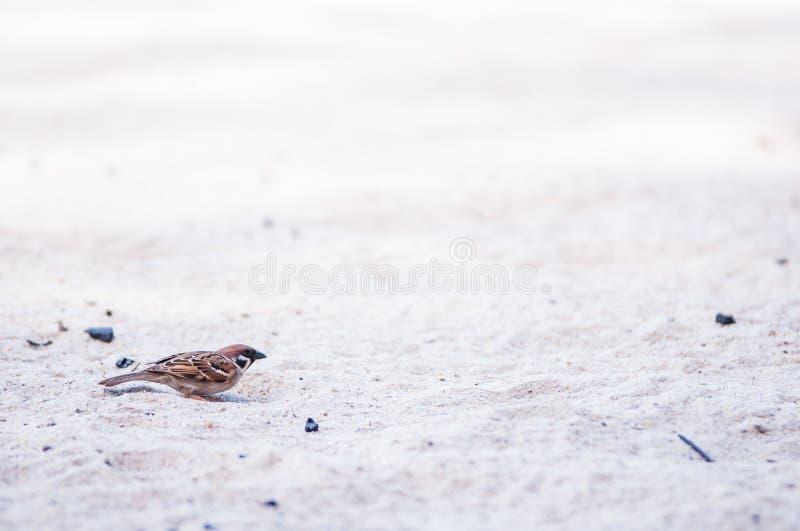 Stridio sulla sabbia immagini stock libere da diritti