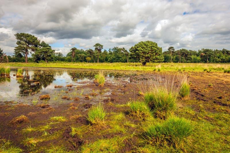 Strijbeekse Heide, il Brabante Settentrionale, Paesi Bassi fotografia stock libera da diritti