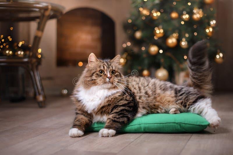 Strimmig katt och lycklig katt Julsäsong 2017, nytt år royaltyfri fotografi