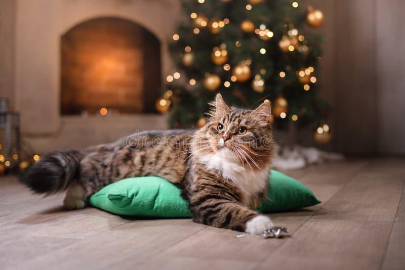 Strimmig katt och lycklig katt Julsäsong 2017, nytt år royaltyfria foton