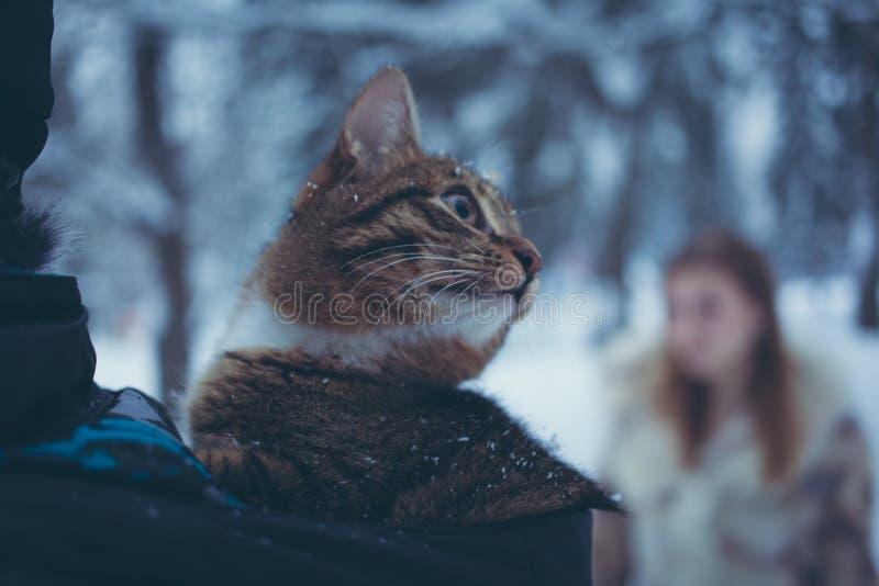Strimmig kattfärgkatt i huven av ett omslag på en suddig bakgrund av en flicka med flödande hår arkivfoto
