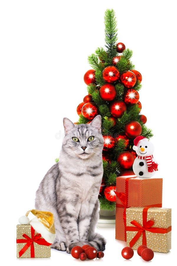 Strimmig kattkatt med den santa hatten och julgåvor arkivfoton