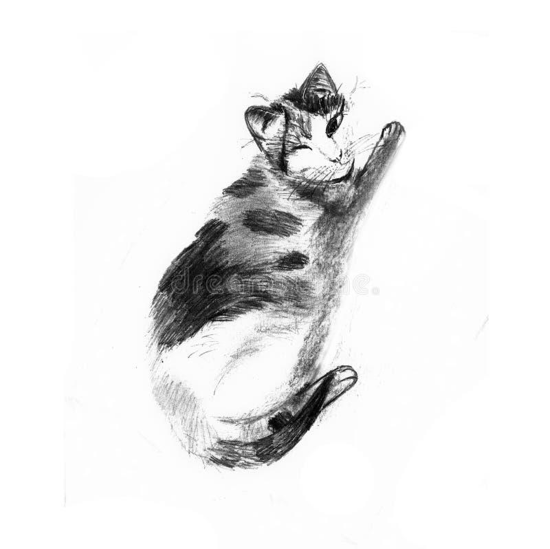 Strimmig kattkatt med ett öga stock illustrationer