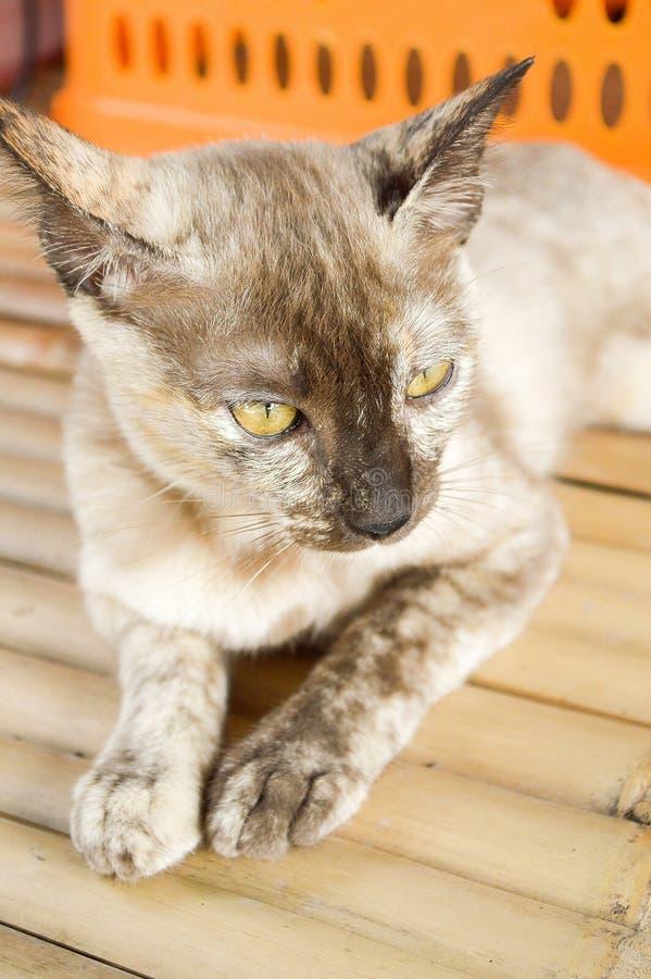 Strimmig kattkatt på bambugolv arkivfoto