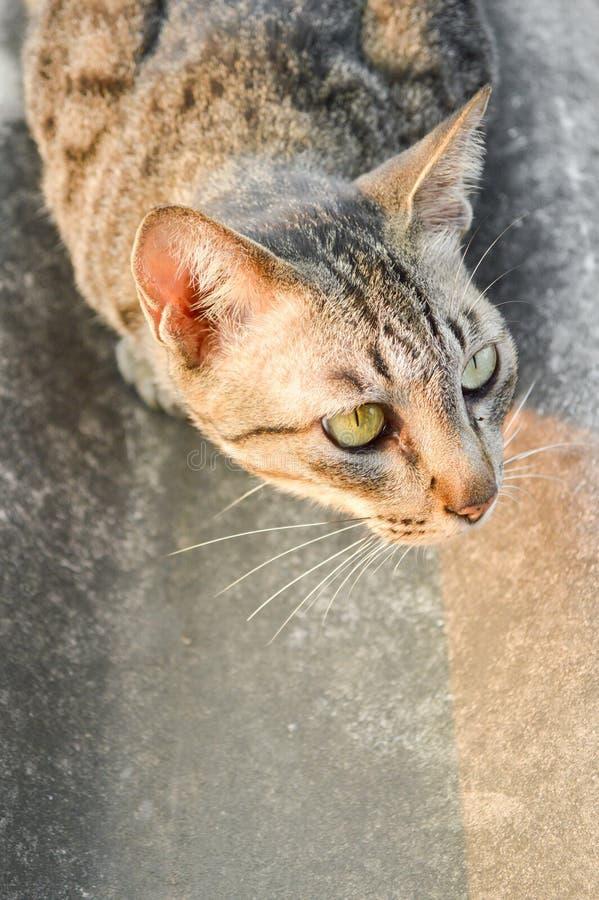 Strimmig kattkatt på tegelplattataket royaltyfri fotografi