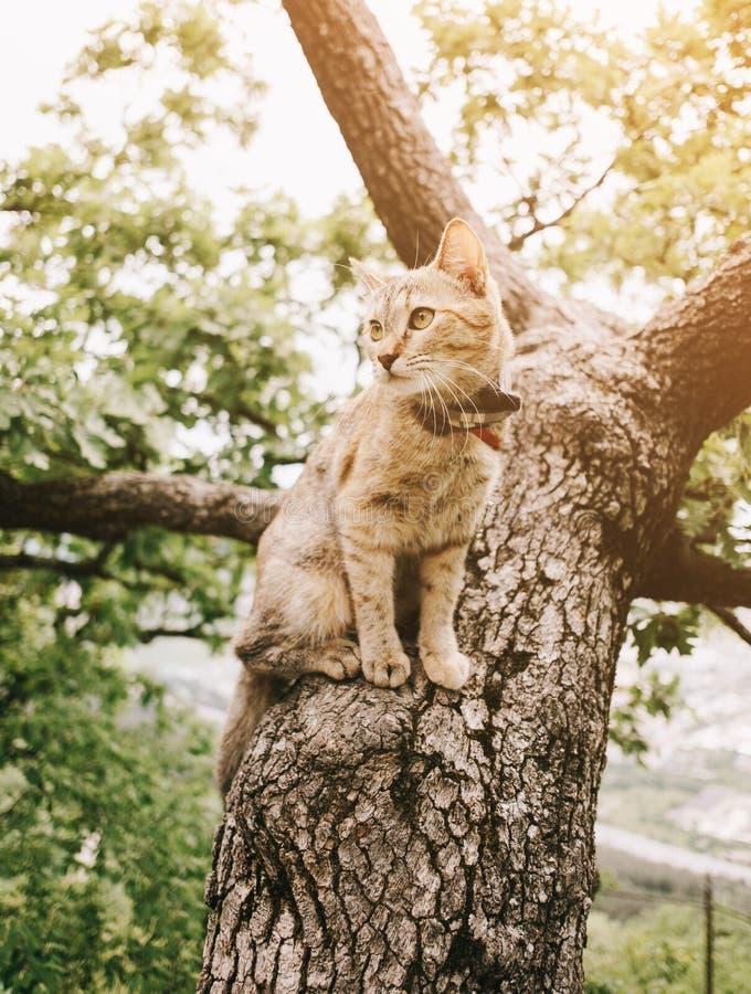 Strimmig kattkatt som sitter på träd i sommar arkivfoto