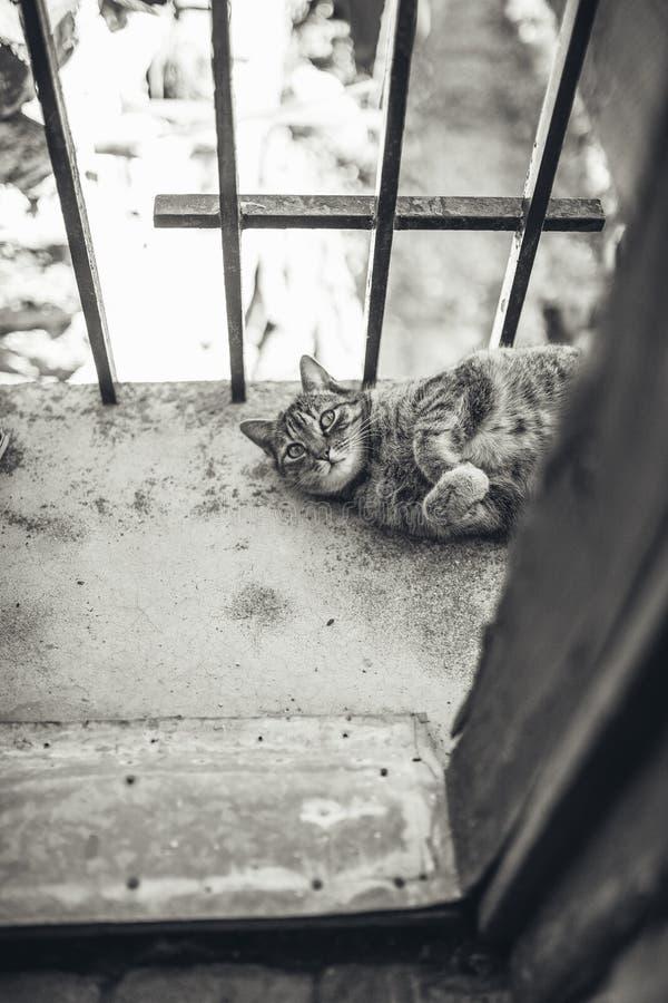 Strimmig kattkatt som vilar att ligga p? en balkong royaltyfri foto