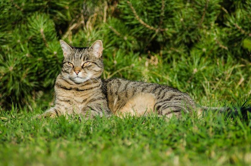 Strimmig kattkatten ligger i trädgården vid trädet Katten är ett husdjur, familjen älskar henne Hon är härlig, lycklig och tyst arkivbild