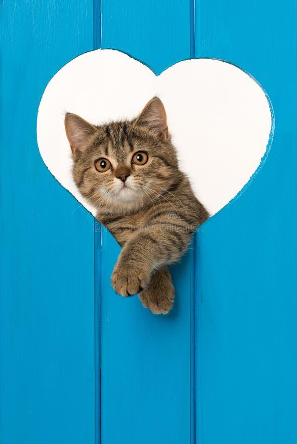Strimmig kattkattunge som ser ut ur en hjärta royaltyfria foton