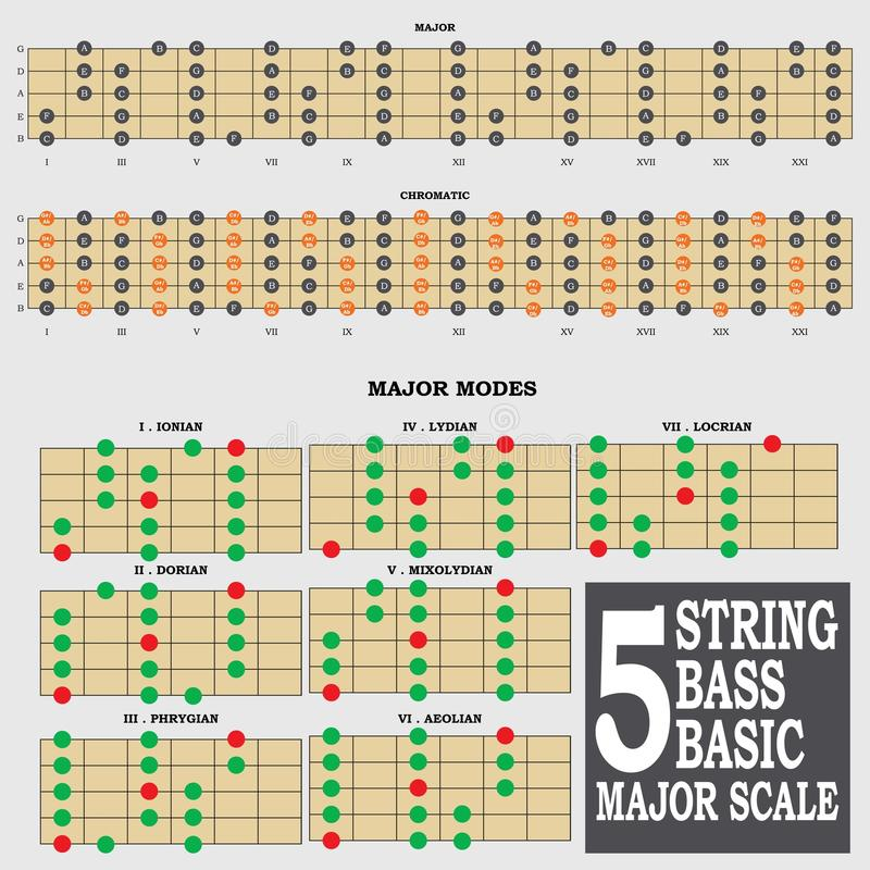 5 string bass basic major scale for bass player te stock image image of augmented ionian. Black Bedroom Furniture Sets. Home Design Ideas