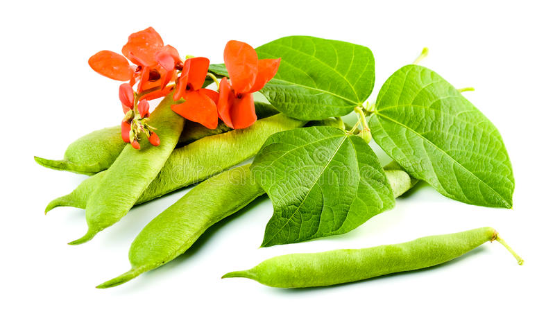 Download String beans stock photo. Image of nobody, healthy, leaf - 29060158