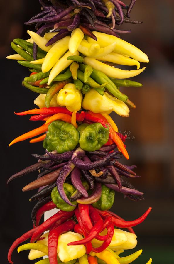 String of colorful peppers royalty free stock photos
