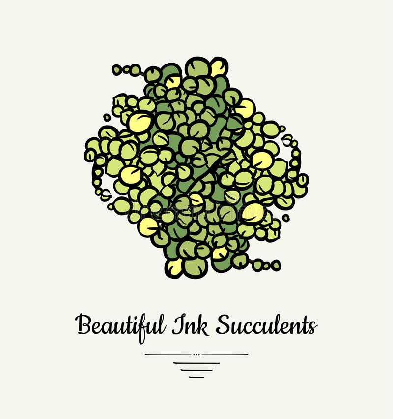 String Of Pearls Senecio hand drawn succulent vector isolated illustration. Modern beautiful ink succulent plant logo, icon, stock illustration