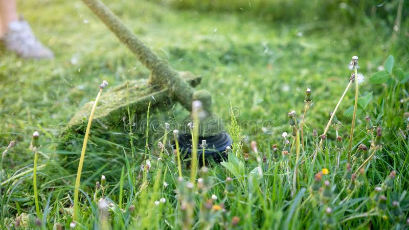 String trimmer mowing big grass, time stopped, particles of grass and dandelions are flying around, banner 16x9 format. String trimmer mowing big grass, time royalty free stock image