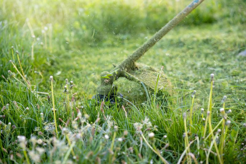 String trimmer mowing big grass, time stopped, particles of grass and dandelions are flying around, sunlight on the background. Workflow royalty free stock images