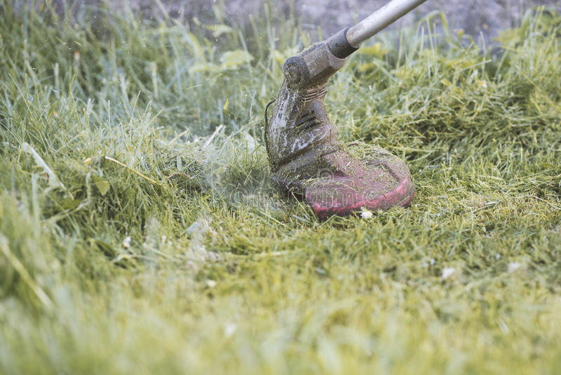 String trimmer mowing the grass, grass particles flying around. Moment stock photo