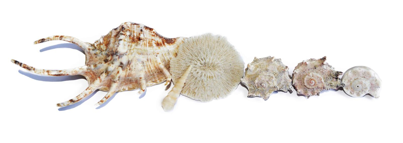 Strip of seashells with white background stock images
