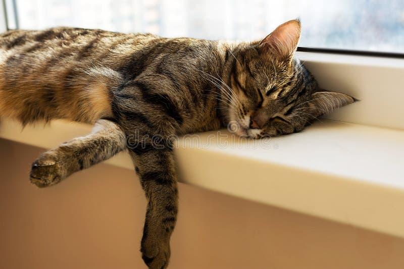 Stripe кот napping и лежа на windowsill стоковая фотография