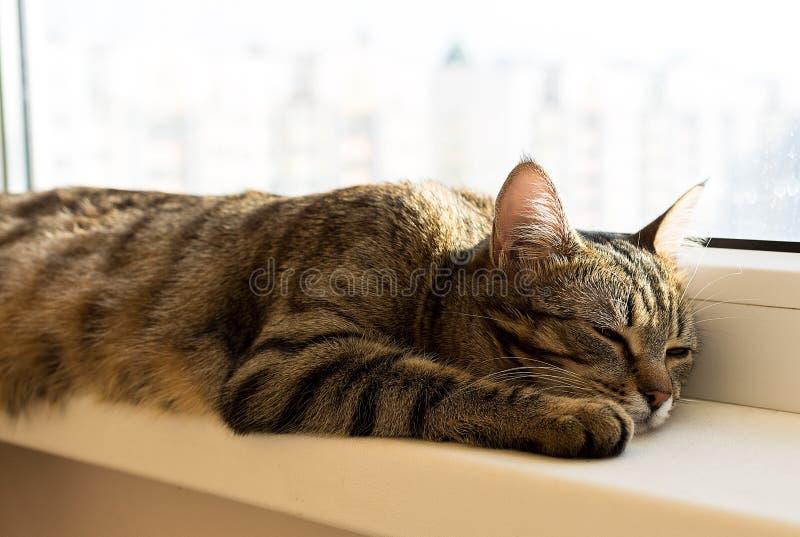 Stripe кот napping и лежа на windowsill стоковое фото