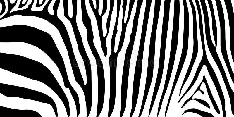 Stripe animal jungle texture zebra vector black white royalty free illustration