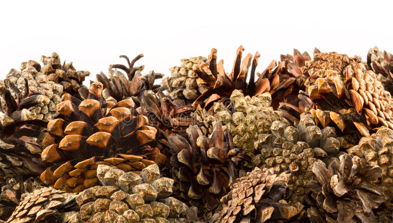 Stripe, border of pine cones, isolated on white. Background stock image