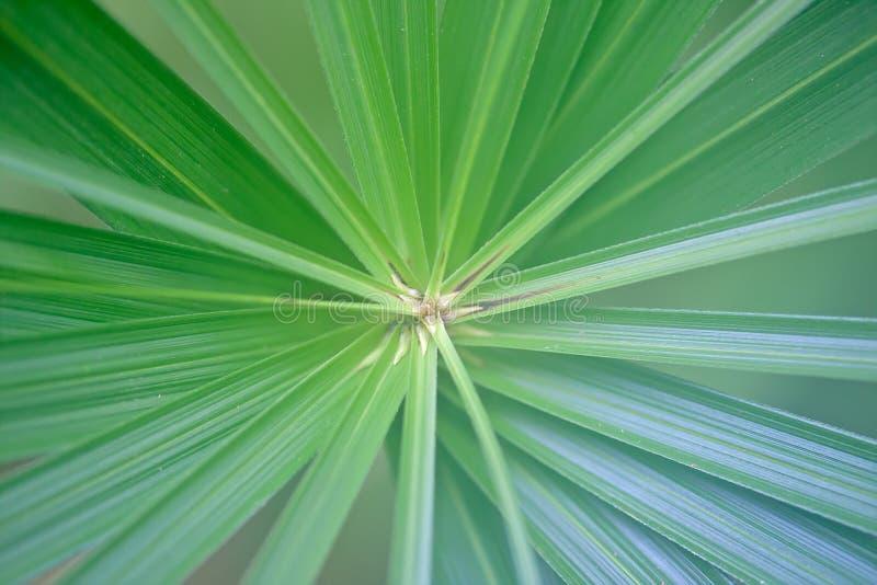 Striped зеленый цвет разбивочный излучать лист ладони голубой стоковые изображения