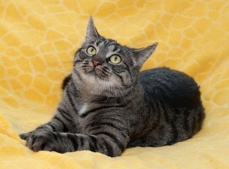 Download Striped кот лежит Dreamily на желтом цвете Стоковое Фото - изображение насчитывающей лапка, tabby: 40581060