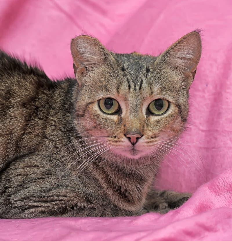 striped кот с закрепленным ухом стоковые изображения