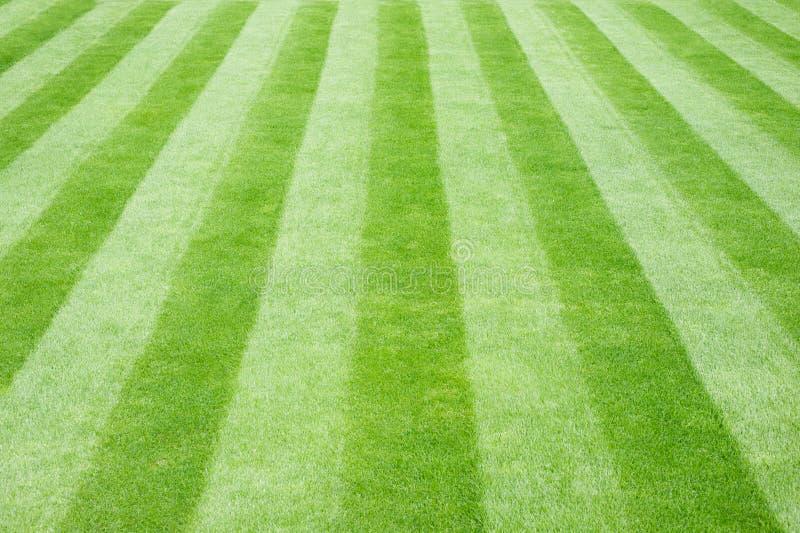 striped реальное лужайки травы стоковая фотография rf