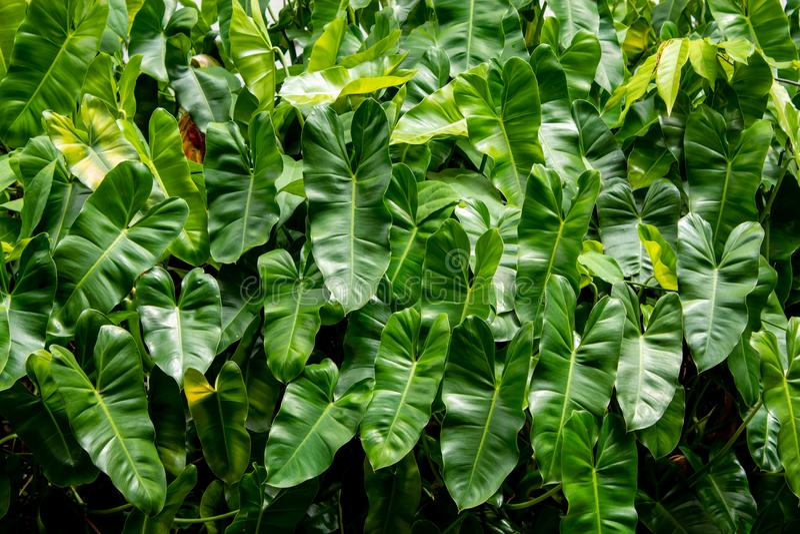 Striped темные ые-зелен лист, видят картины ясно стоковые фотографии rf